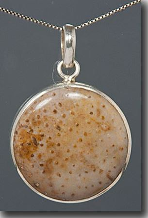 Picture for category Petrified Wood