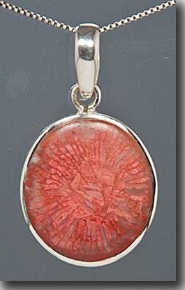 Utah Agatized Red Horn Coral