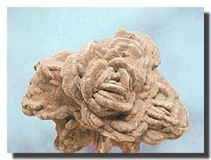 Barite Rose Mineral Specimen